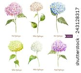 hydrangea  watercolor  flowers  ... | Shutterstock .eps vector #243128317