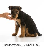 hand holding chin of airedale... | Shutterstock . vector #243211153