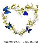 heart shape from cherry tree... | Shutterstock . vector #243215023