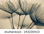 Abstract Dandelion Flower...