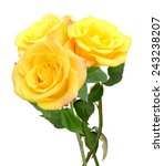 Yellow Roses Bunch Isolated On...
