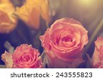 vintage photo of rose | Shutterstock . vector #243555823