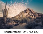 Desert Landscape In Scottsdale...
