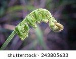 close up fern leaf
