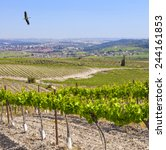Small photo of Vineyards and fields spring view of agricultural valley in Israel