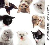 funny kittens | Shutterstock . vector #244164943