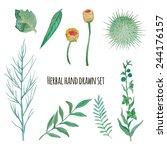 watercolor herbal elements set. ... | Shutterstock .eps vector #244176157