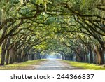savannah  georgia  usa oak tree ... | Shutterstock . vector #244366837