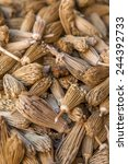 Small photo of Berber toothpicks (Ammi visnaga) on the market i Marrakesh, Morocco
