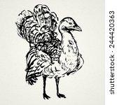 bustard hand drawn. vector... | Shutterstock .eps vector #244420363