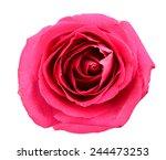 a pink rose flower | Shutterstock . vector #244473253