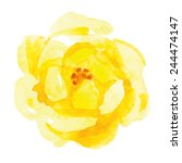 Yellow Rose Flower. Watercolor.