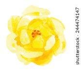 Yellow Rose Flower. Watercolor.