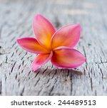 red frangipani flower on a... | Shutterstock . vector #244489513