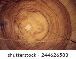 Wood Texture Of Cut Tree Trunk...