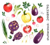 watercolor vector vegetables... | Shutterstock .eps vector #244893793