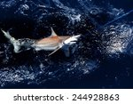 a dangerous shark  grabbing at ... | Shutterstock . vector #244928863