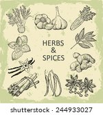 herbs and spices. hand drawing... | Shutterstock .eps vector #244933027