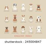 Set Of English Dogs   Eps10...