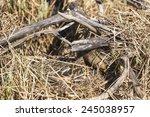Mallard Female In A Camouflage...