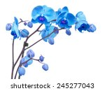 Orchid Branch  With Blue...