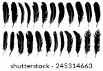 set of different feathers... | Shutterstock .eps vector #245314663