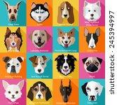 set of flat popular breeds of...   Shutterstock .eps vector #245394997