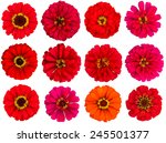 Red Zinnia Flowers  Cut Out ...