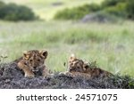 Handsome Little Lion Cubs ...