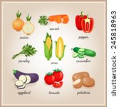 vegetables ingredients.... | Shutterstock . vector #245818963