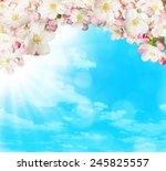 Spring Blossoms On Blue Sky...