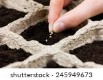 Woman Hand Planting Seed In Th...