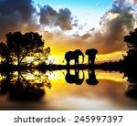 elephants between plants lake | Shutterstock . vector #245997397
