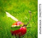 Fallen Fresh Red Apple In The...