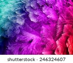 colorful ostrich feather... | Shutterstock . vector #246324607