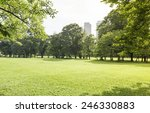 green lawn with trees in park... | Shutterstock . vector #246330883