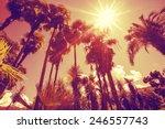 Sun Shining Through Tall Palm...