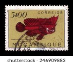 Small photo of MOZAMBIQUE - CIRCA 1951: A stamp printed in Mozambique shows redskinfish, ablabys binotatus, series fishes, circa 1951.