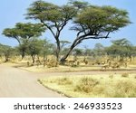 Scenic View Of Kruger Park Wit...