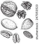 walnut  pecan  and almond... | Shutterstock .eps vector #247053523