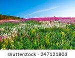 The Spring  Landscape With ...