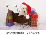 West Highland Terrier dog dressed in a Santa Claus hat and sitting in a miniature sleigh surrounded by gift bags. - stock photo
