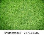 green grass   Shutterstock . vector #247186687