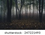 forest with yellow leaves on... | Shutterstock . vector #247221493