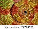 detailed close up of the curled ... | Shutterstock . vector #24723391