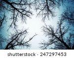 Black Leafless Trees...