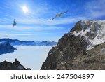 bird wheeling above snow... | Shutterstock . vector #247504897