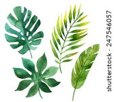 Four Tropical Leaves. Hand...