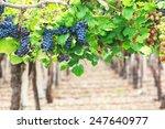 vineyards  argentina | Shutterstock . vector #247640977