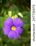 Small photo of Achimenes blue flower. Beauty in nature.